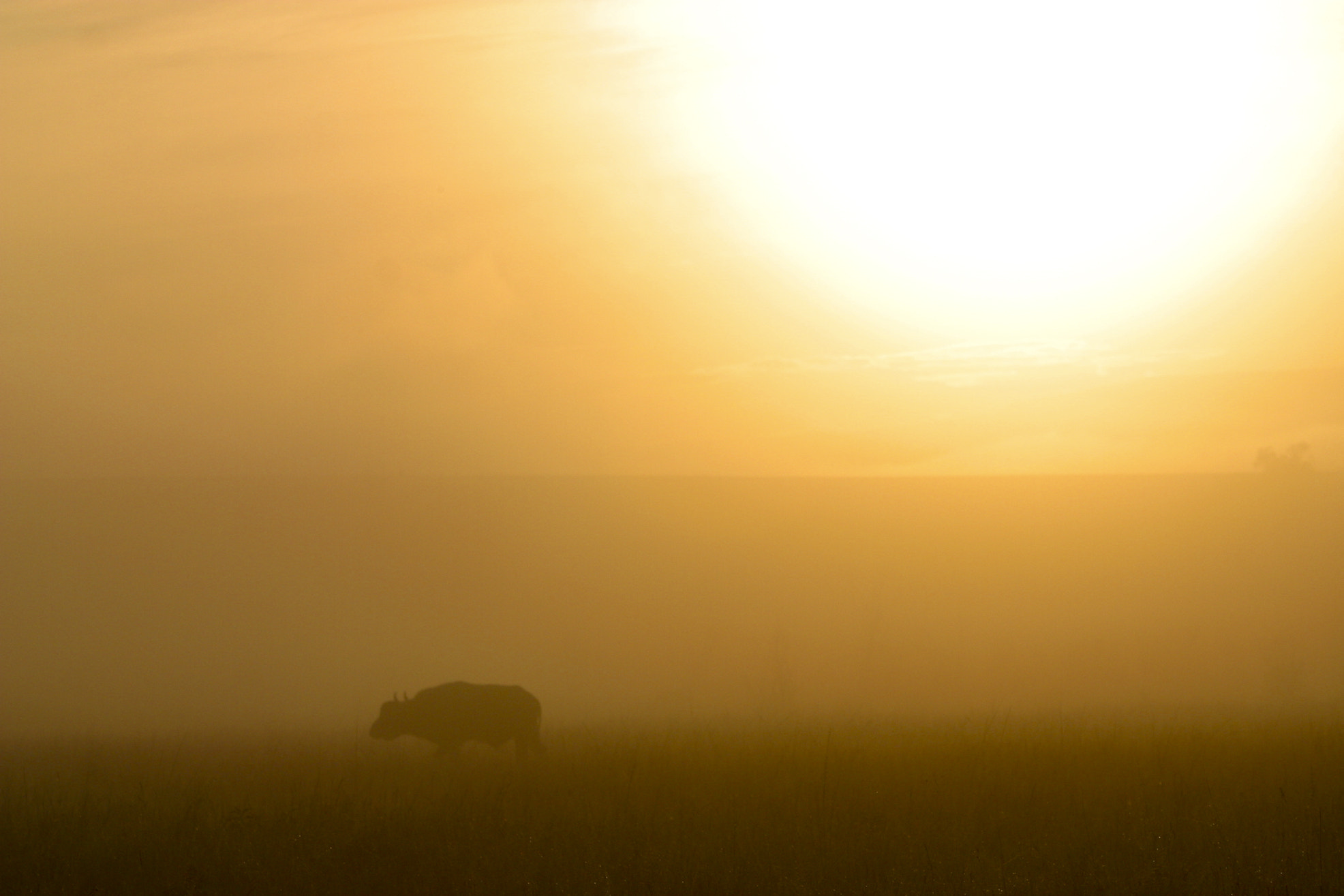 Photograph Beginning with a buffalo by Tim Allen-Rowlandson on 500px