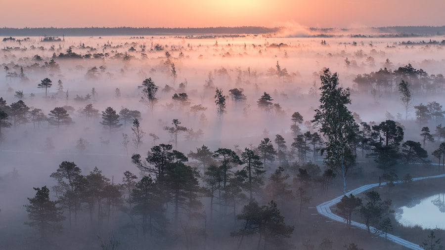 Morning in Moorland by Arvīds Barānovs on 500px.com