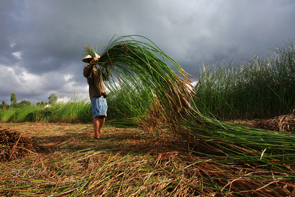 Photograph The Coi harvest by Viet Hung on 500px