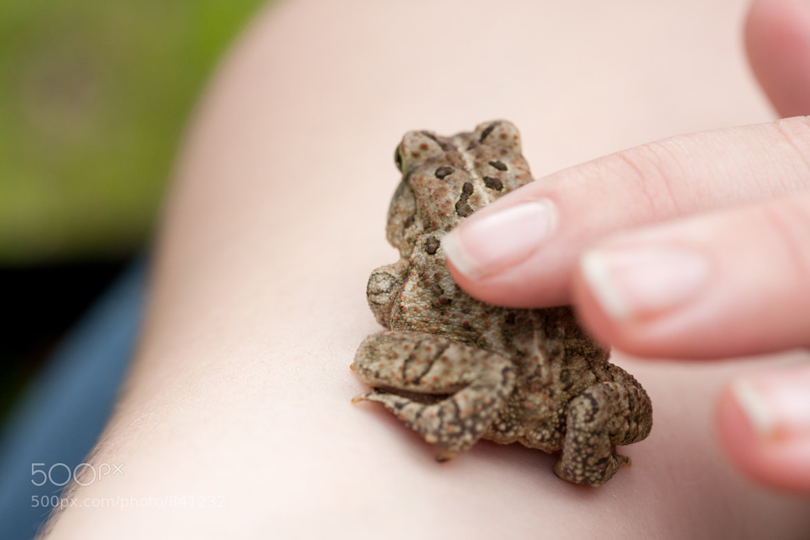 Photograph Stroke the Toad by Dan Snyder on 500px