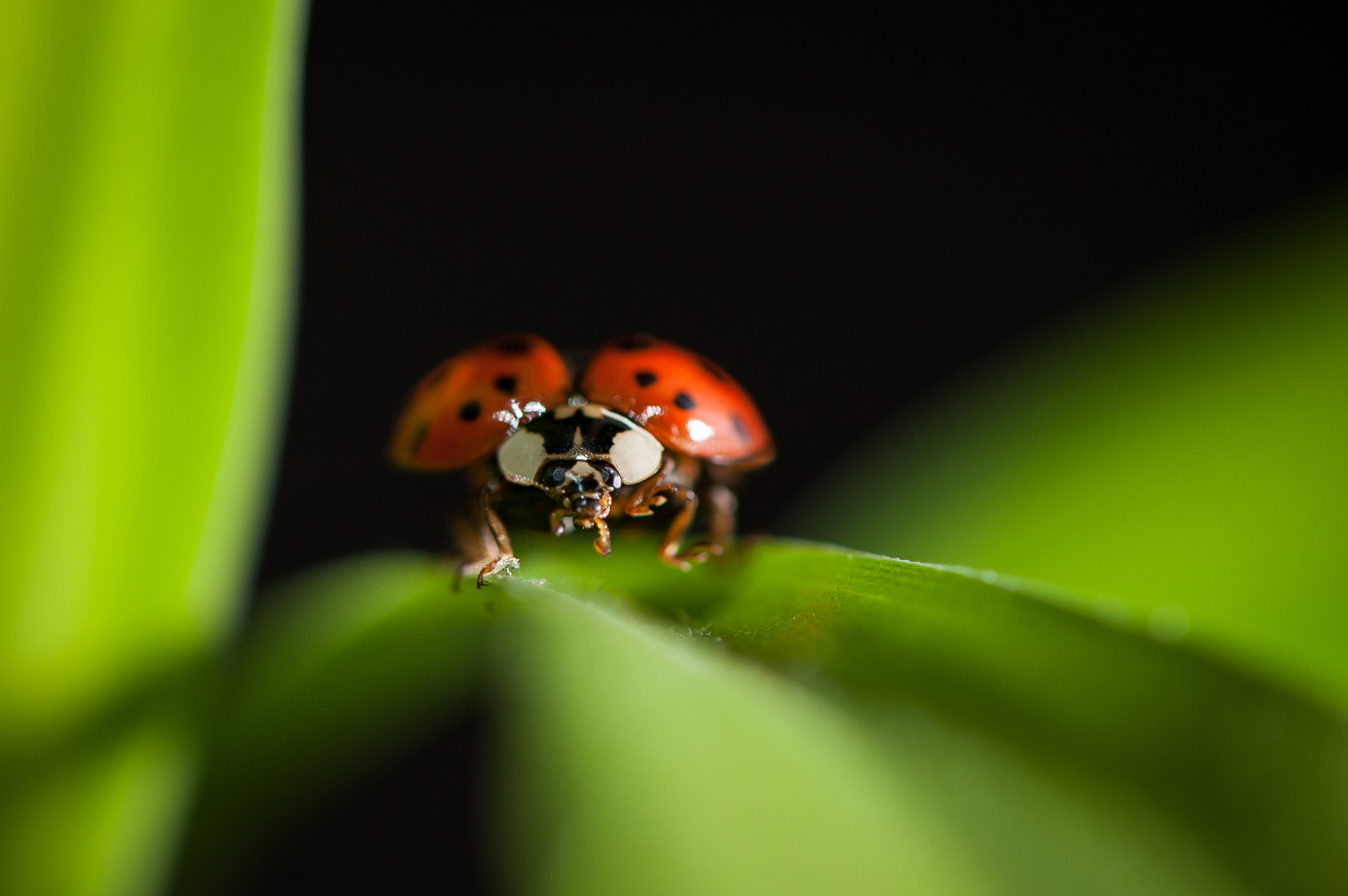 Photograph Angry Bug by Justin Lo on 500px