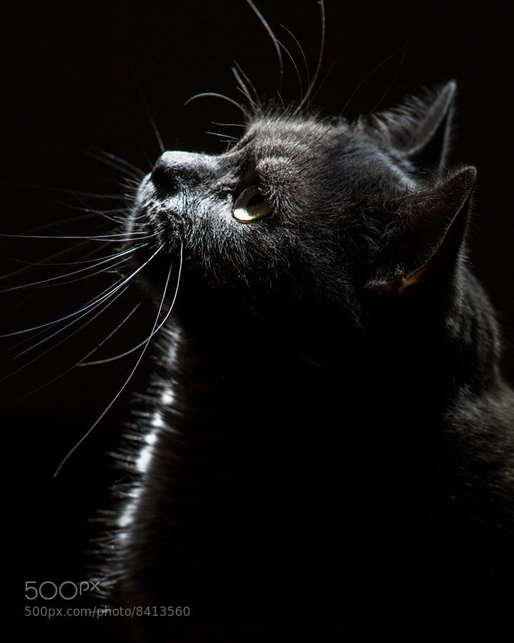 Photograph My Cat by László Oláh on 500px