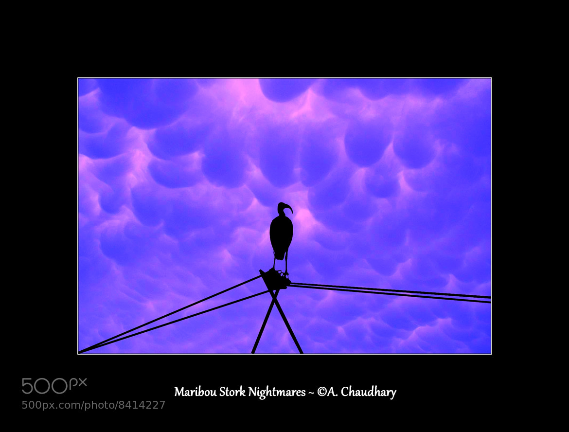 Photograph Maribou Stork Nightmares by Apurva Chaudhary on 500px