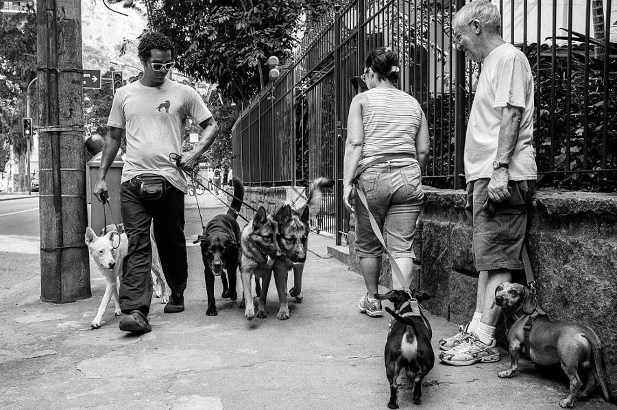 Rio Dogs