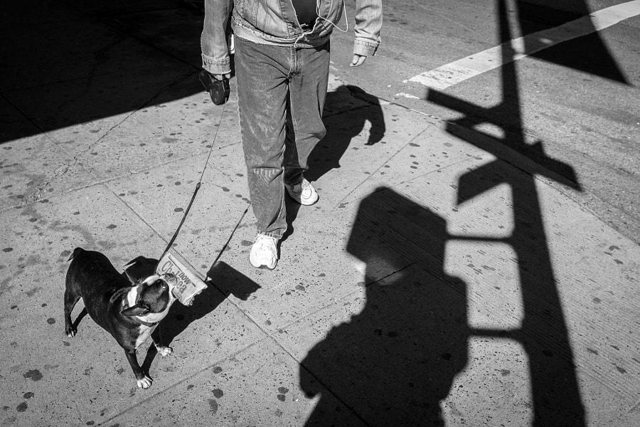 NewYork Dog