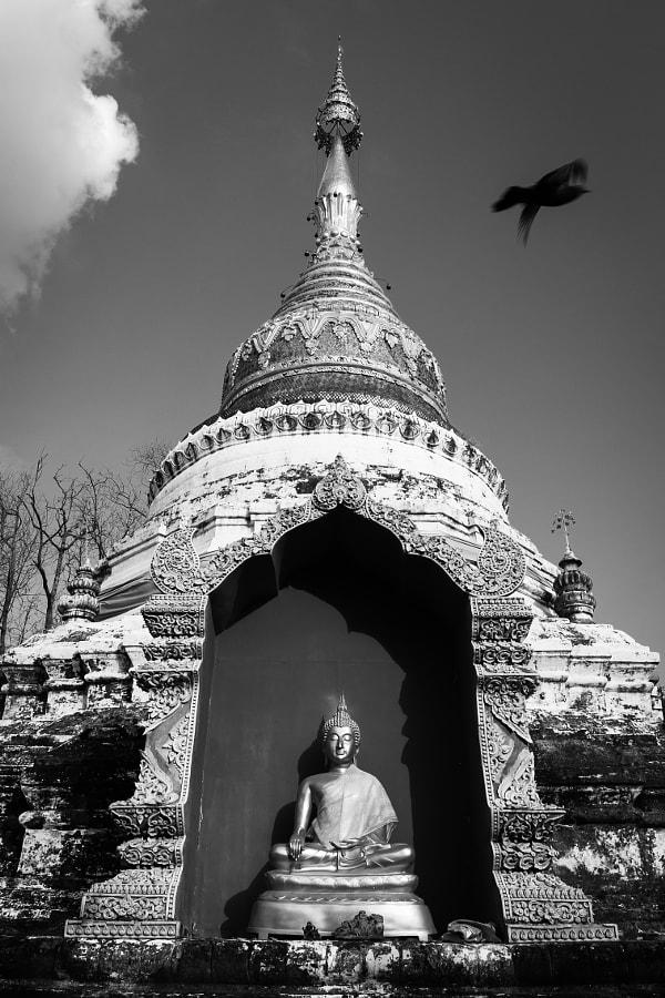Temple Bird Chiang Mai