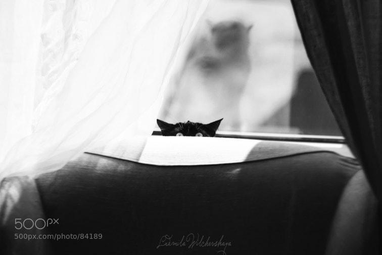 Photograph страаашно) by Liudmila  Wilchevskaya on 500px