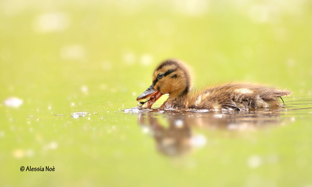 Photograph baby by Alessia Noè on 500px