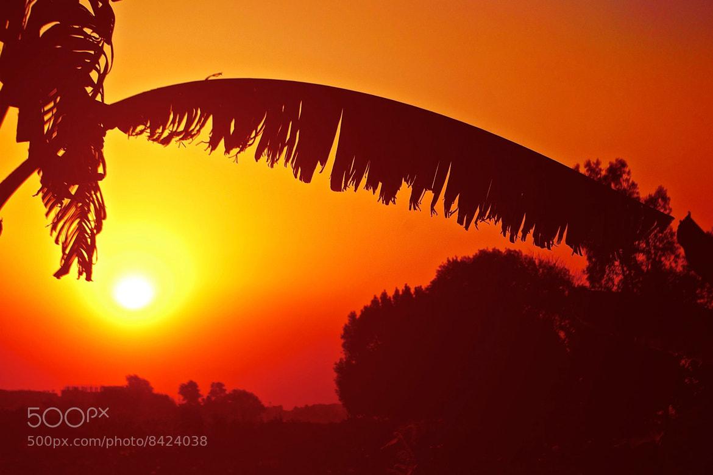 Photograph Sun Eyelid  by jamil ghanayem on 500px