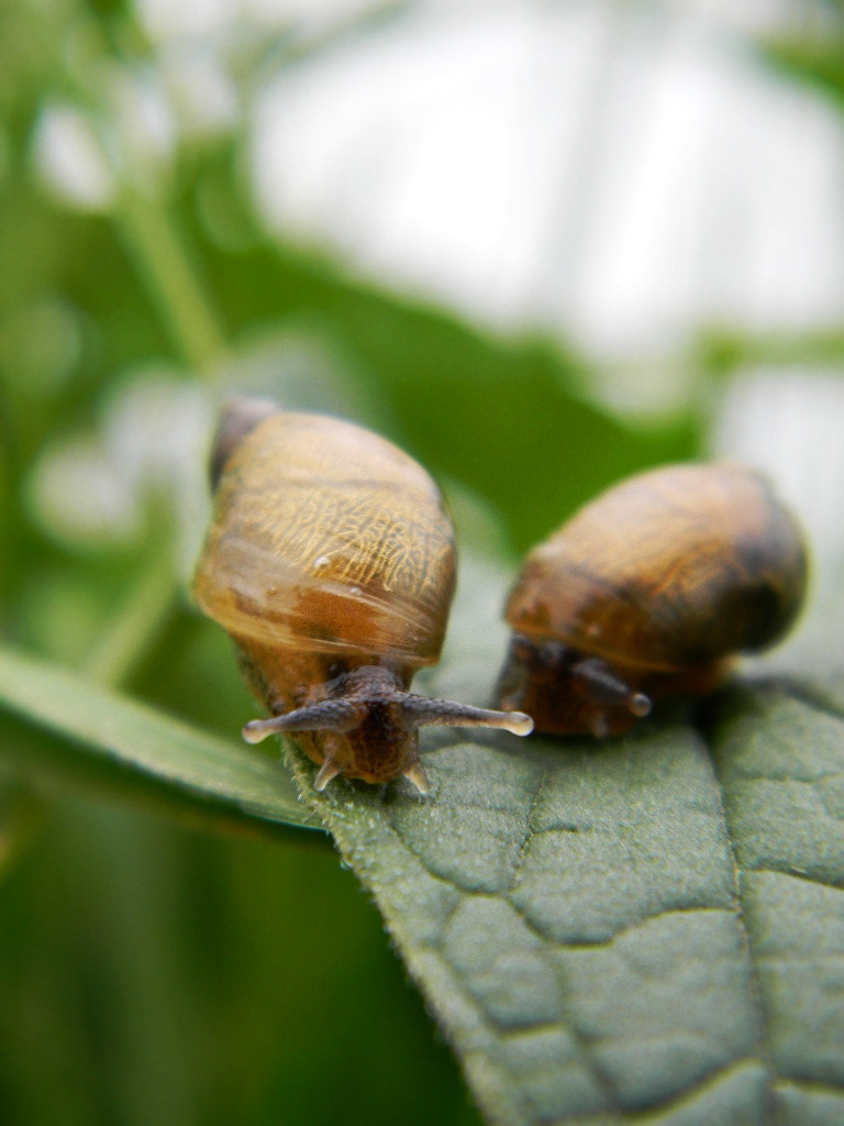 Photograph Snails  by Anne B on 500px