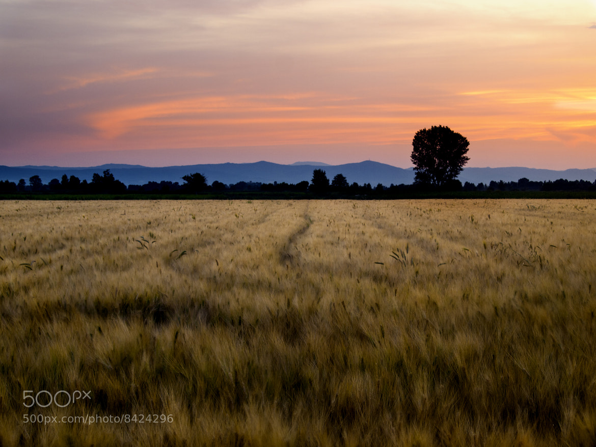 "Photograph  ""wheat"" by Kounoupis Anastasios  on 500px"