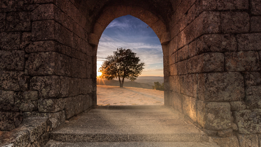 Photograph The tale told by the sun by Pedro Quintela on 500px