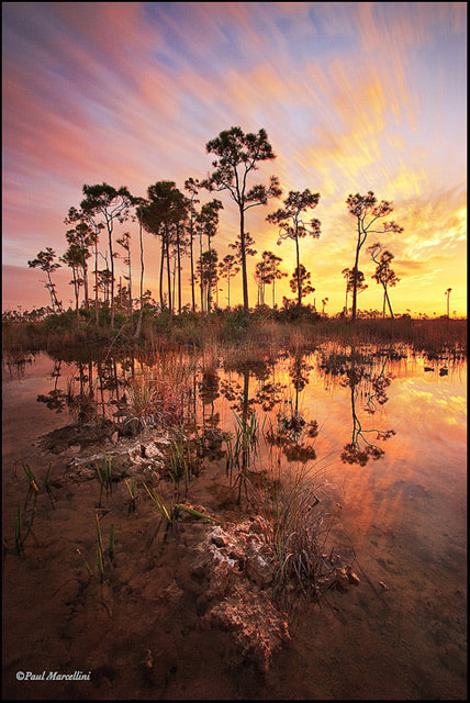 Photograph Wet Season by Paul Marcellini on 500px