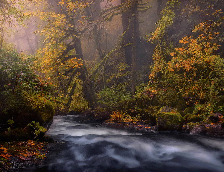 Hidden Place by Candace Bartlett on 500px.com