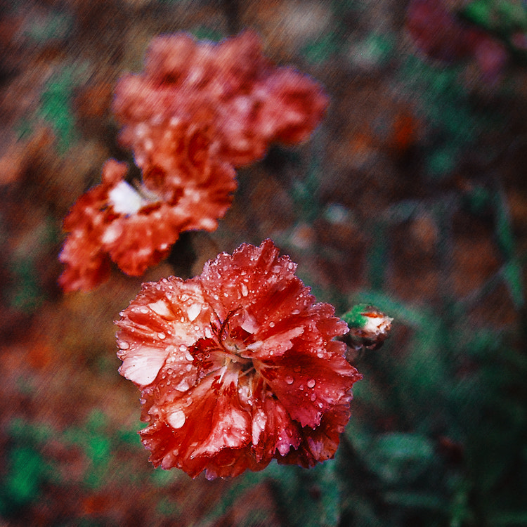 Photograph Red & Green by Olga Parubets on 500px
