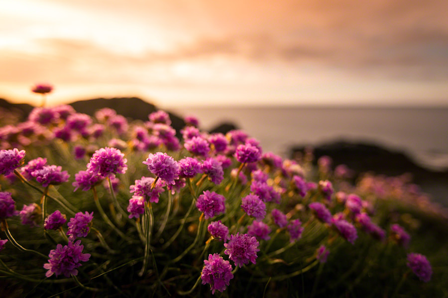 Photograph Flowers in the Coastal Sun by Craig McCormick on 500px