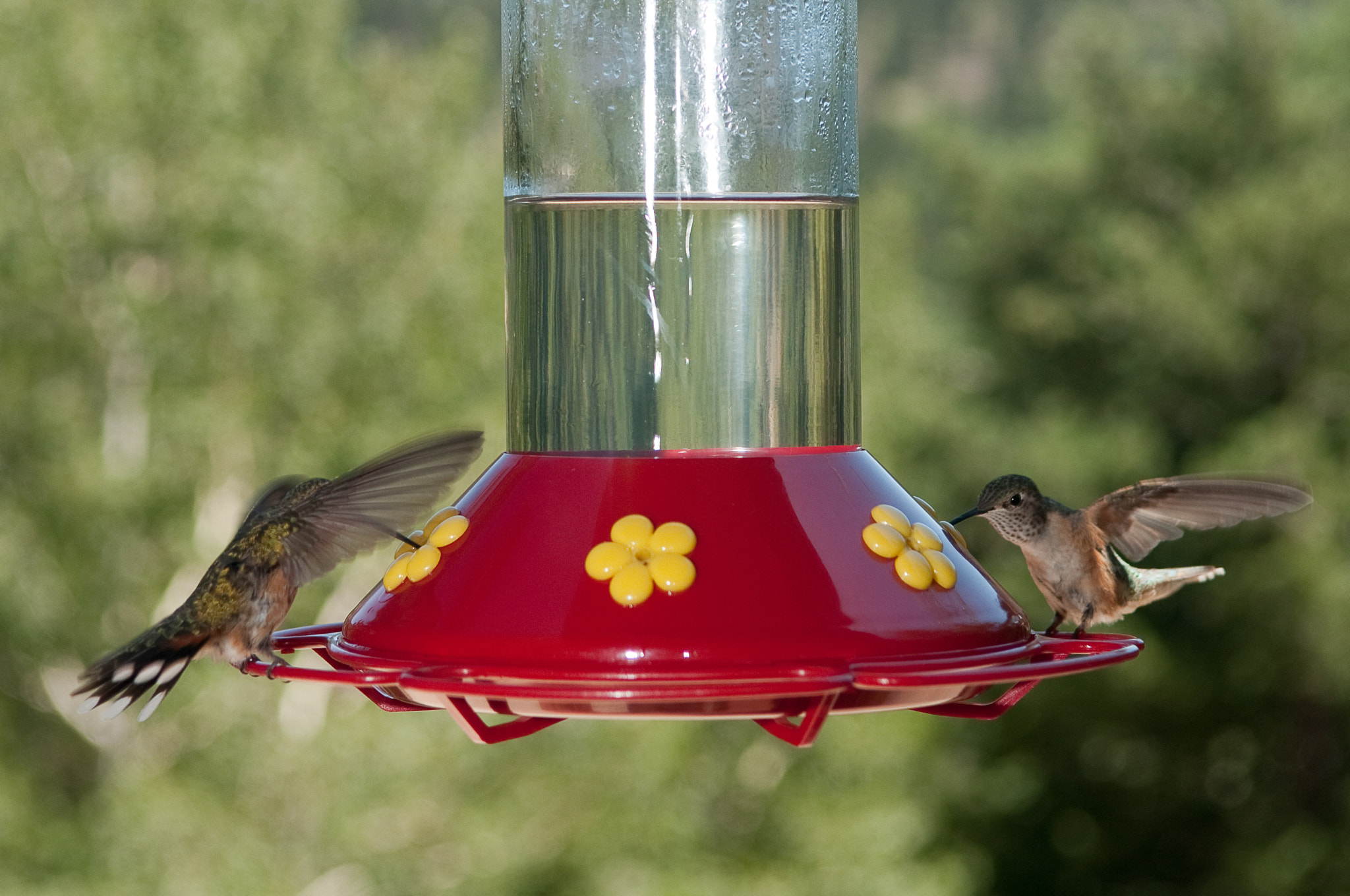 Photograph Hummingbirds by Eric Daugherty on 500px