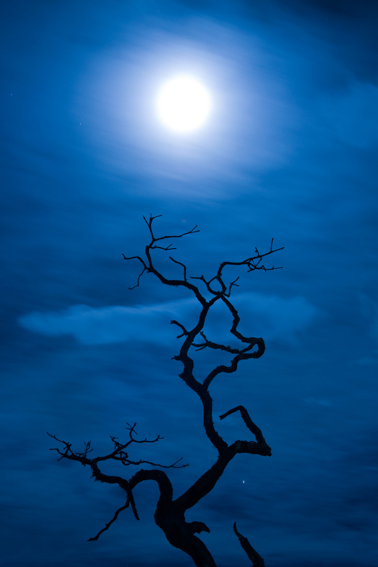 Photograph To the Moon by Darshana Abraham on 500px
