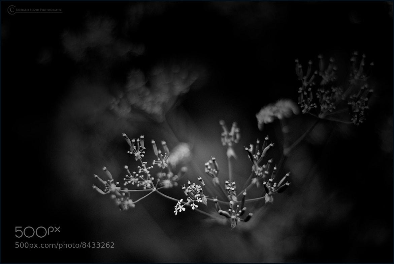 Photograph Fairies by Richard Bland on 500px