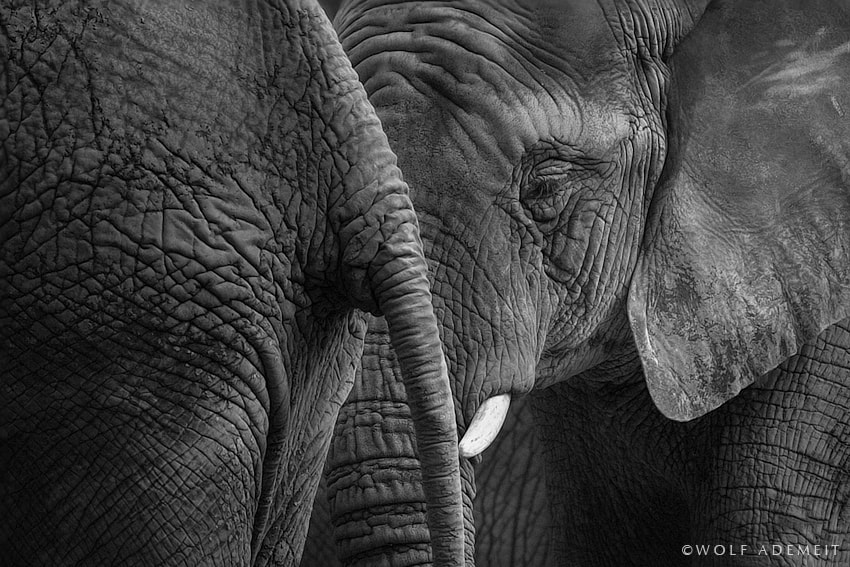 Photograph ELEPHANT SKIN by Wolf Ademeit on 500px
