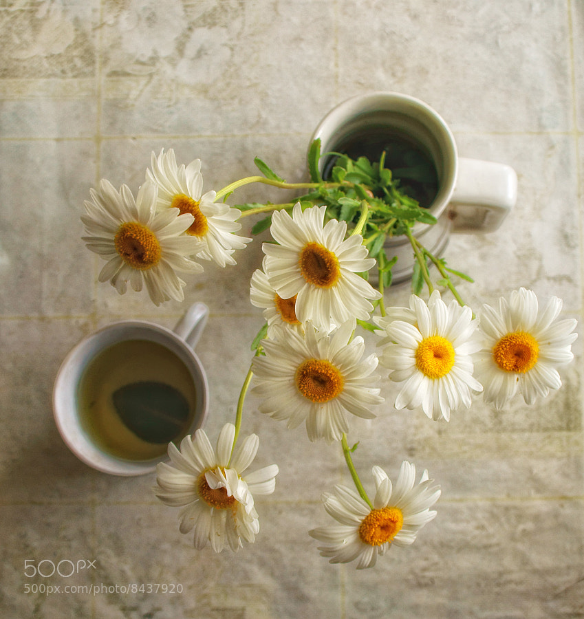 Photograph Chamomile and Mint by Alexey Samoilov on 500px
