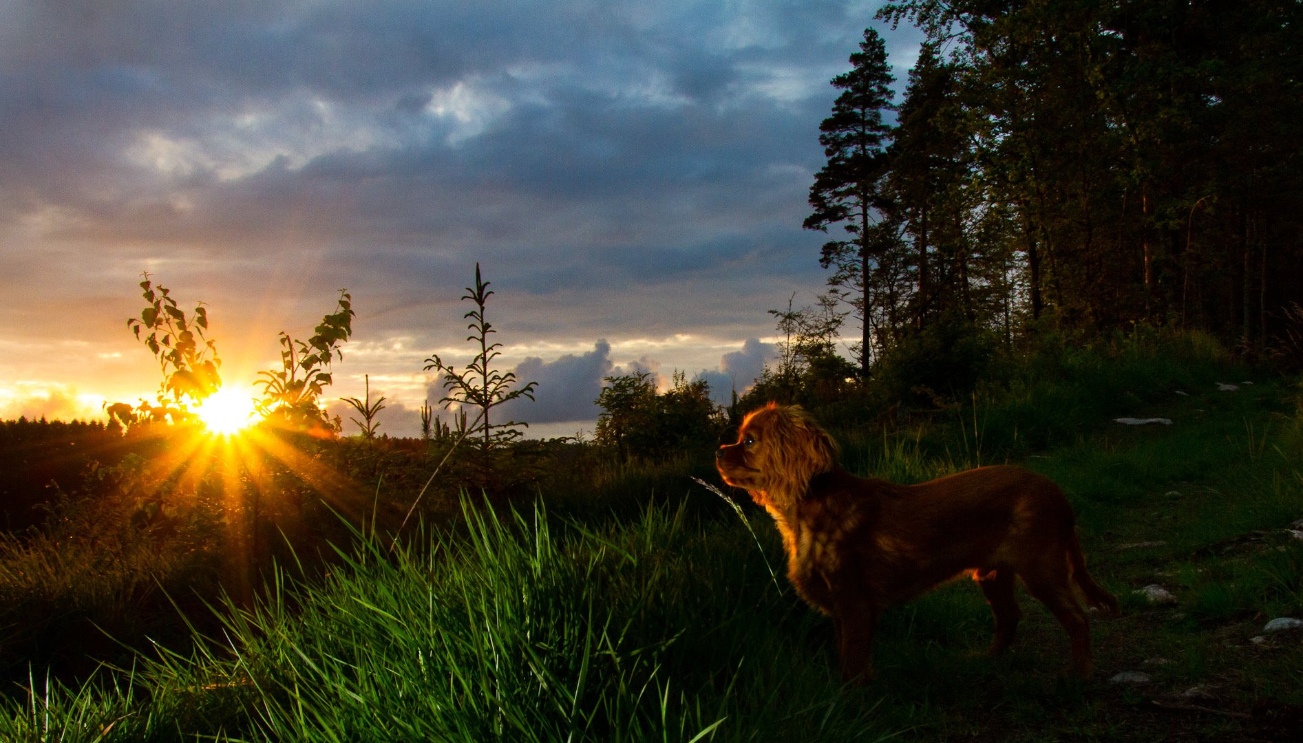 Photograph Mio and the sunset by Morten Holbein on 500px