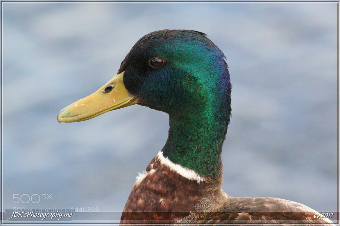 Photograph Dock head by David Rios on 500px