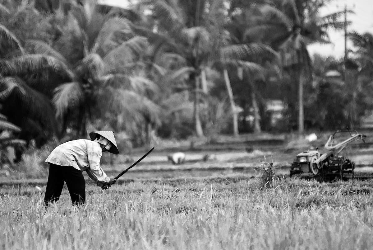 Photograph rice worker by Roberto Benvenuti on 500px
