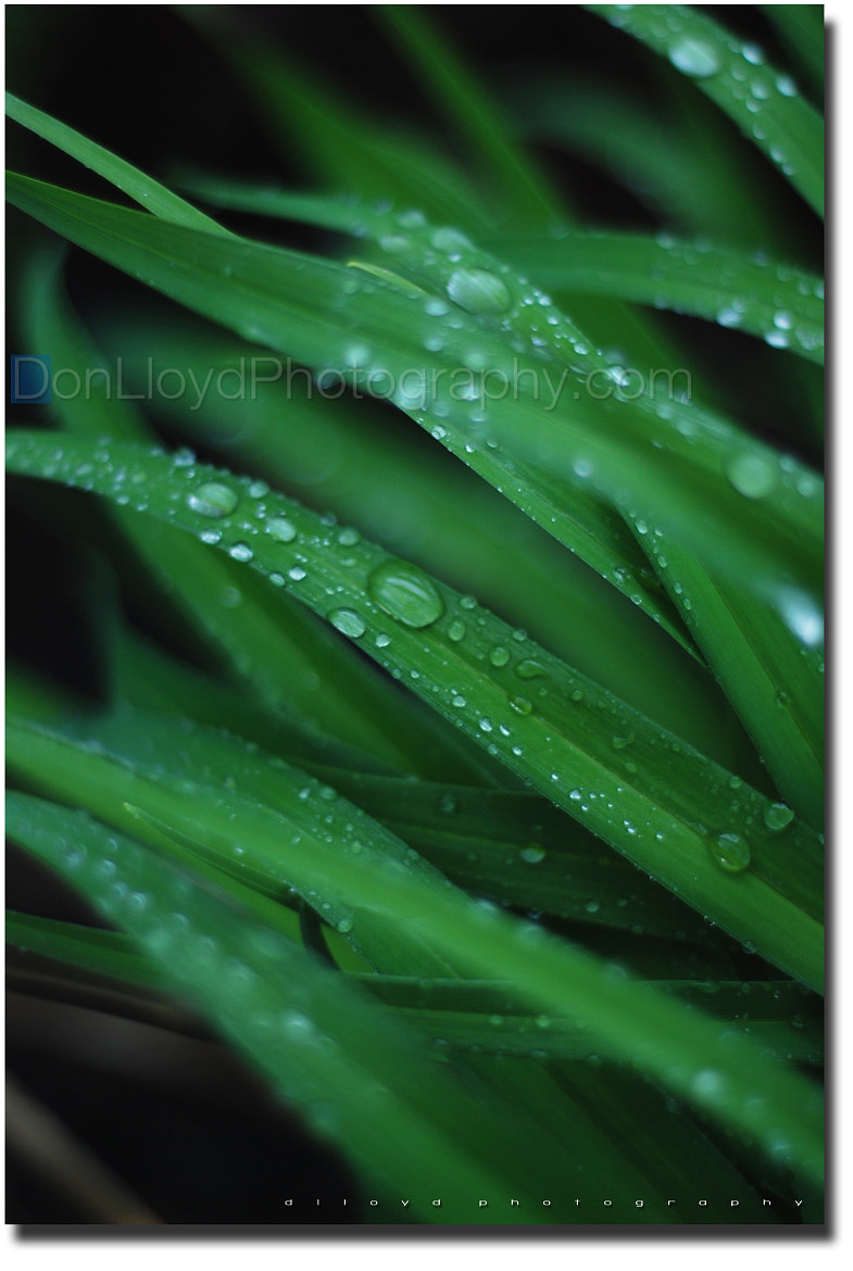 Photograph dew. by Don Lloyd on 500px