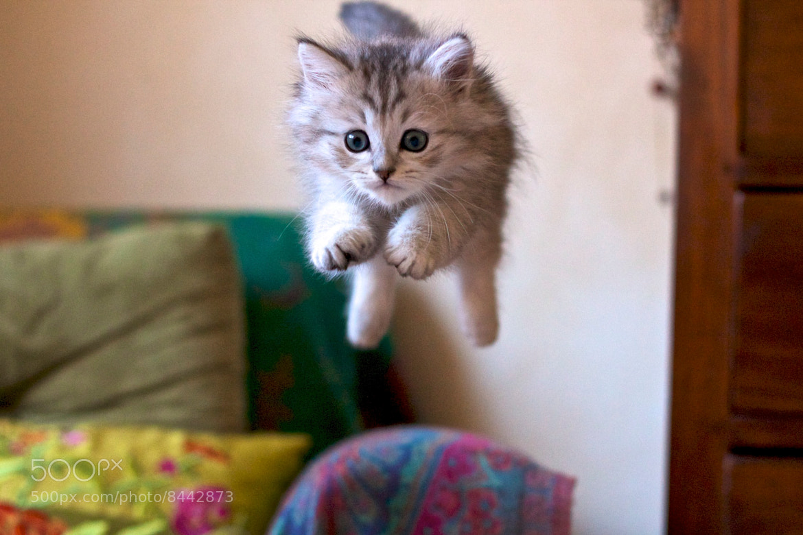 Photograph Flying cat by Patricio Dell'Orto on 500px