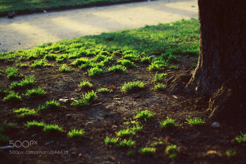 Photograph greenery by Lesia Vlasova on 500px