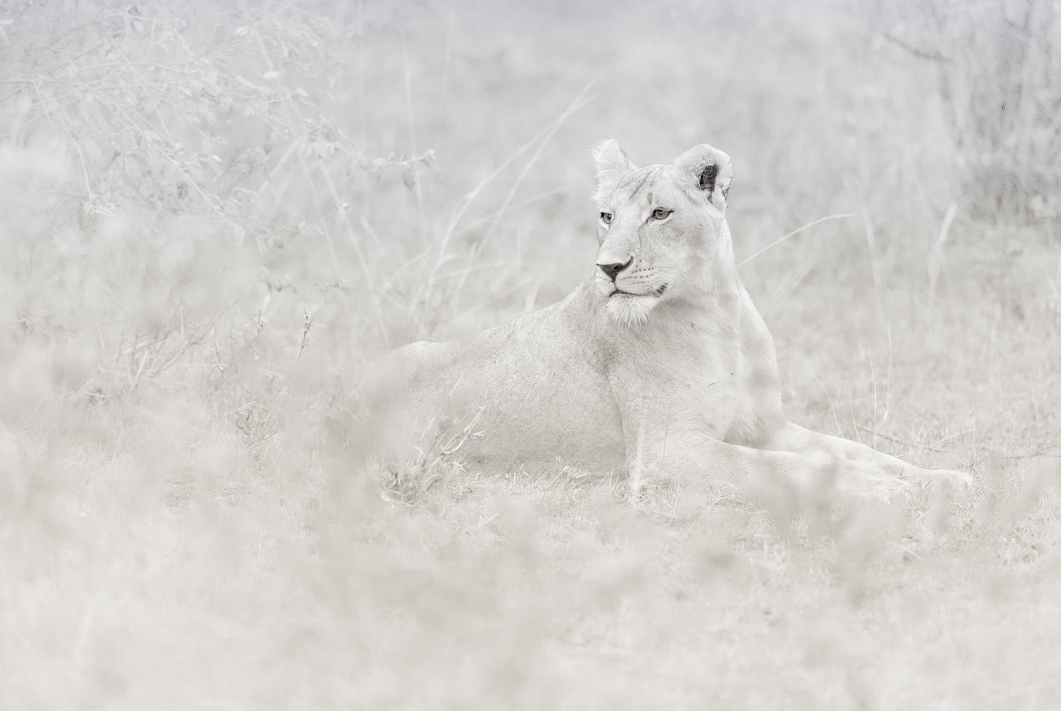 The Lioness by Ali Al-Zaidi / 500px