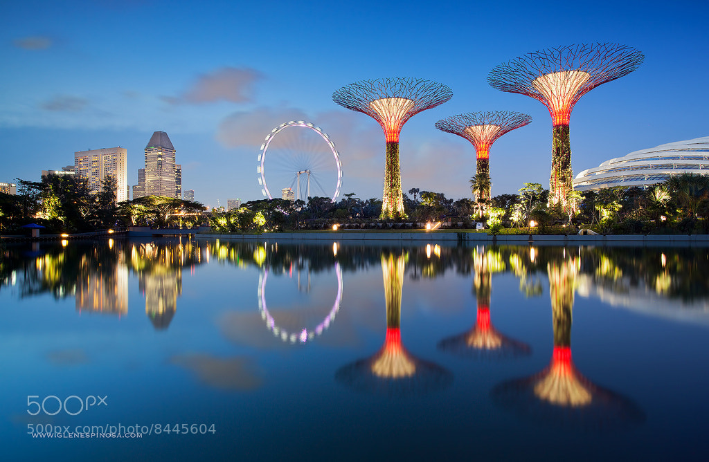 Photograph Gardens by the Bay Supertrees Singapore  by Glen Espinosa  on 500px