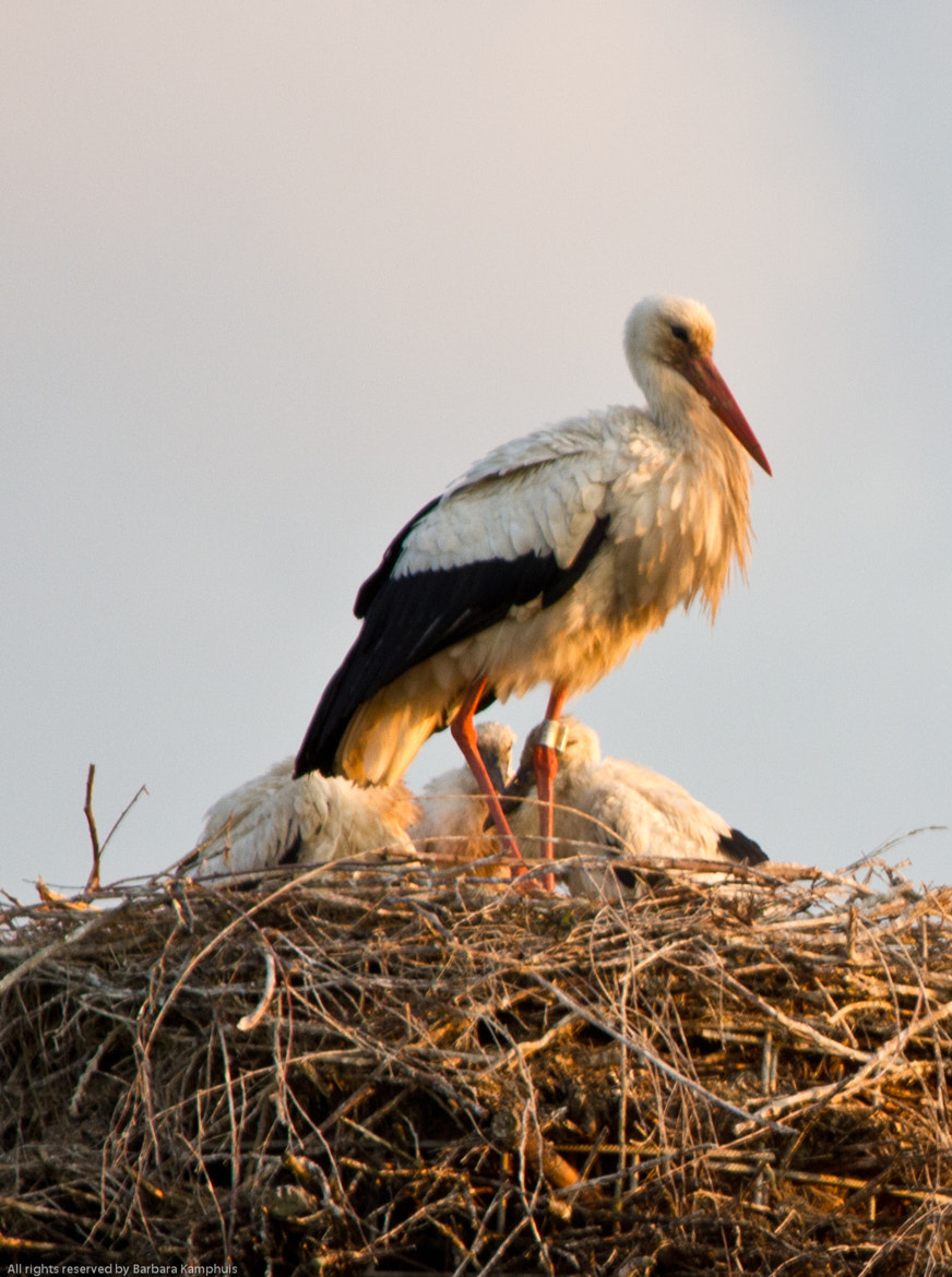 Photograph Stork family by Barbara Kamphuis on 500px