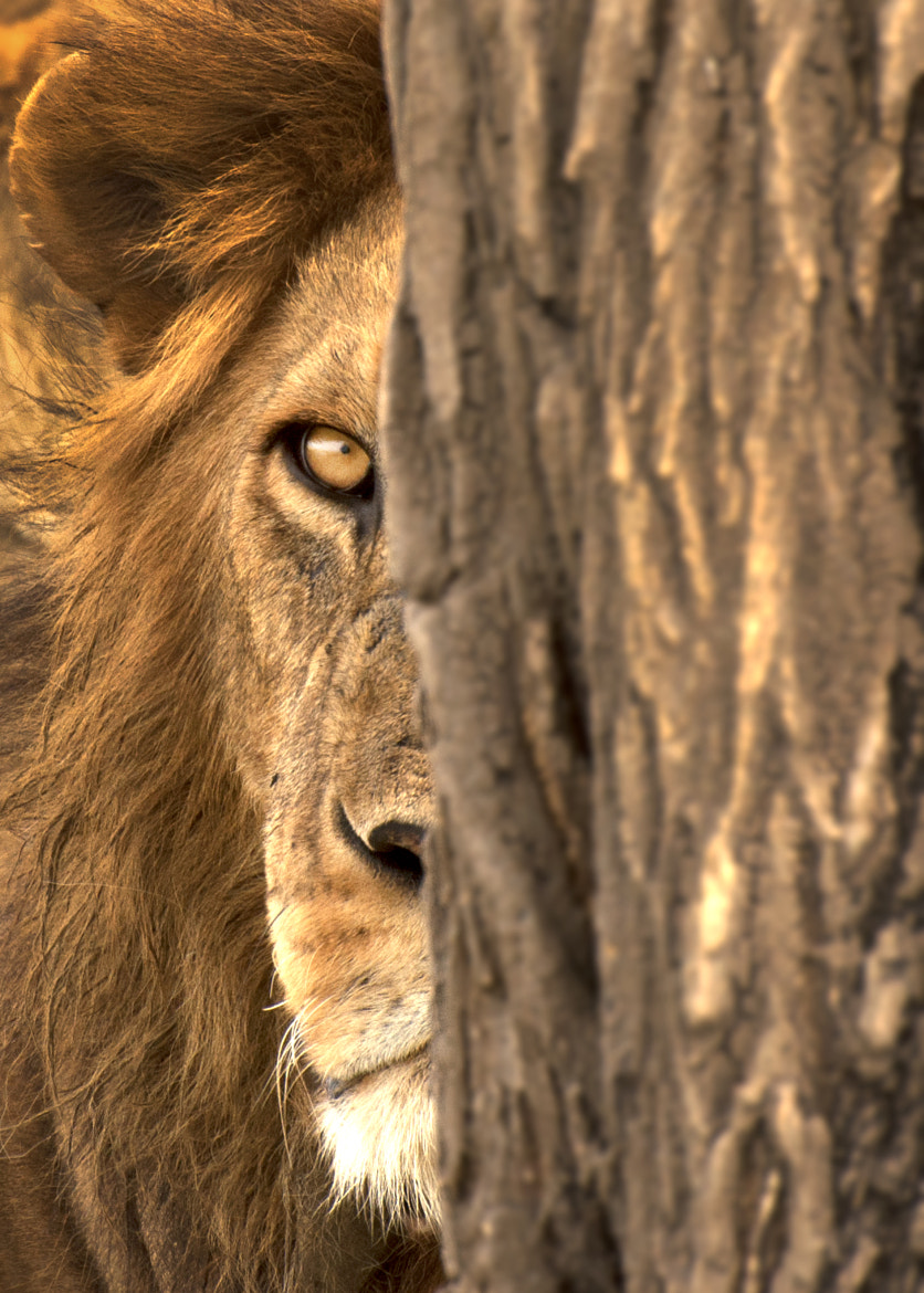 Photograph The king is watching by Yoel Schlaen on 500px