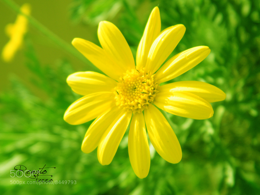 Photograph YELLOW III by Renato Ferro on 500px