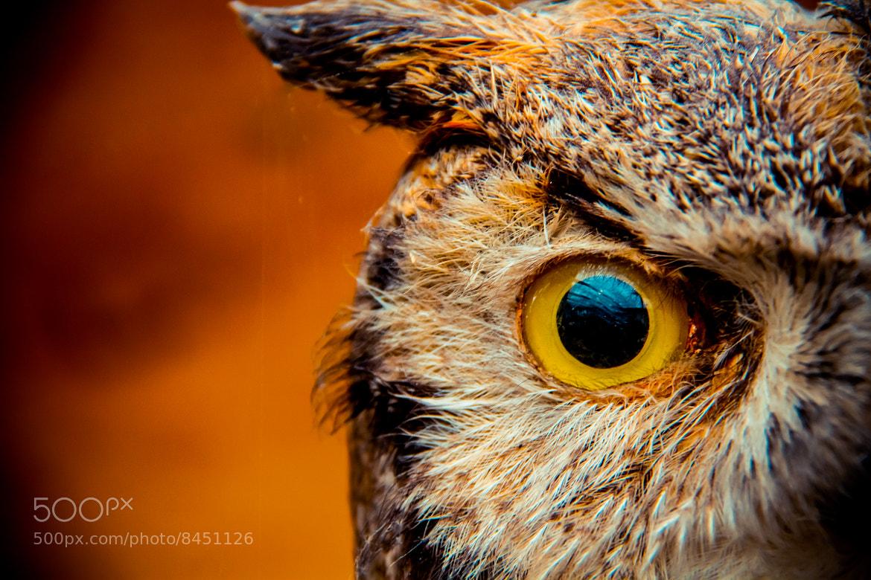 Photograph Hoo, Hoo? It Was Eye. by Lotus Carroll on 500px