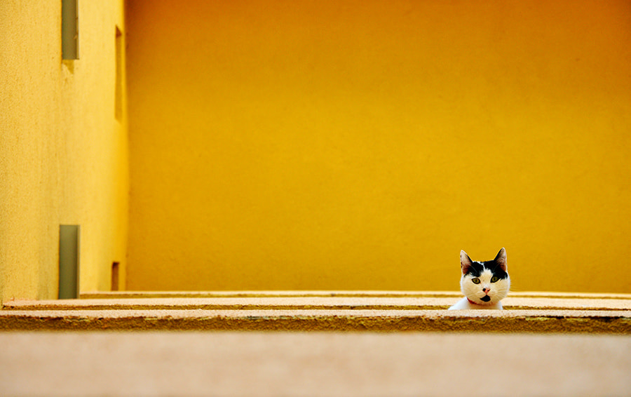 Photograph Curiosity by MARIAN Gabriel Constantin on 500px