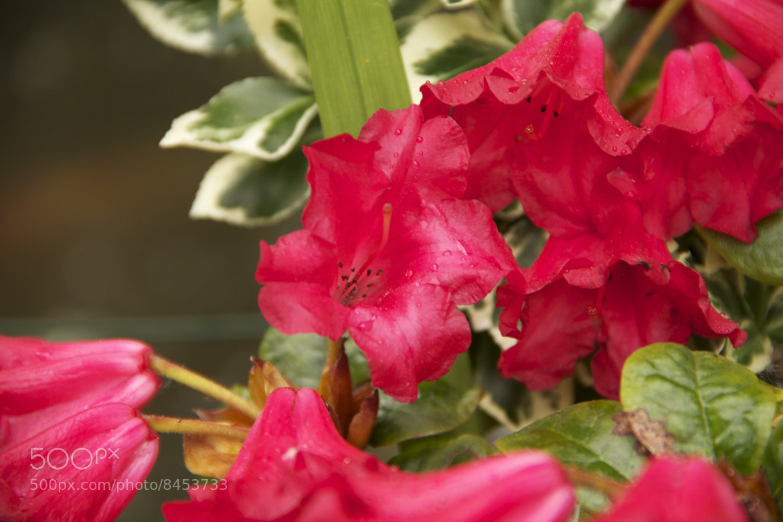 Photograph flower by Karen Sanders on 500px