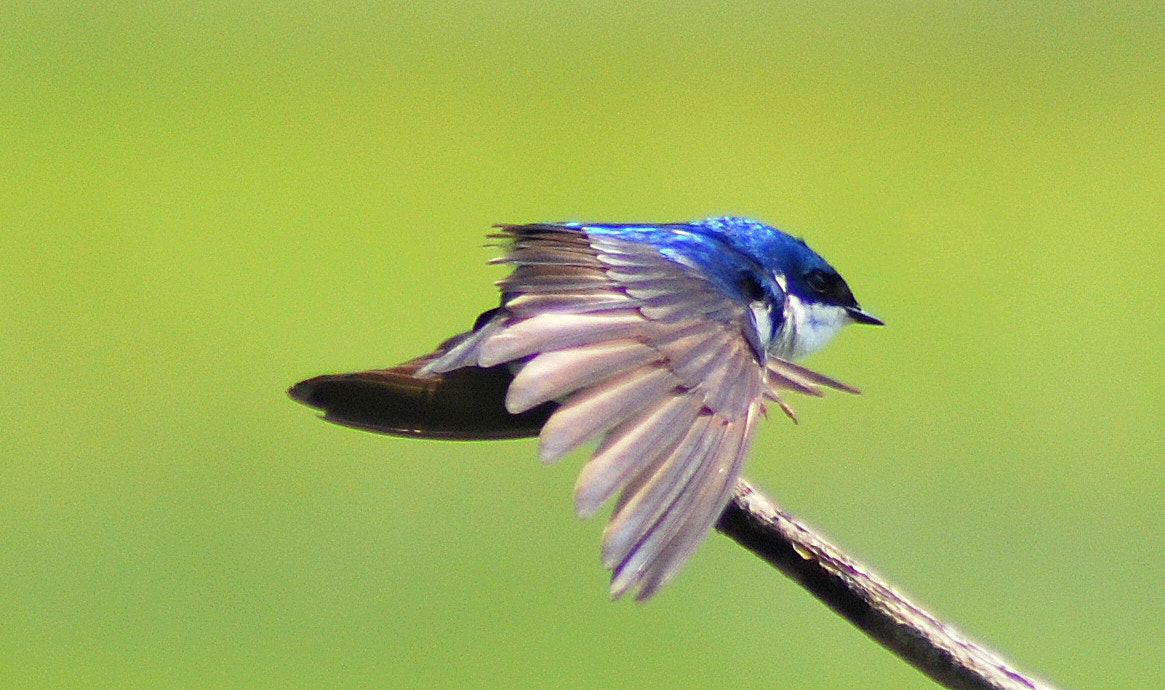 Photograph Wing stretch by Michael Cohen on 500px