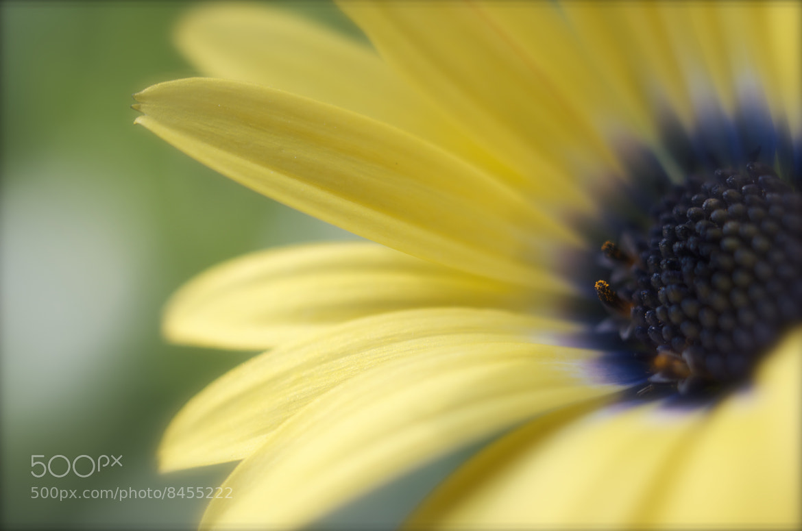 Photograph Softly yellow & blue by Denise's photos on 500px