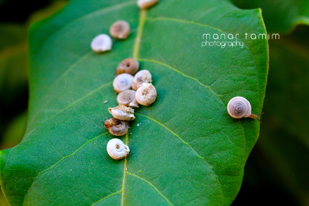 Photograph Untitled by Manar  Tamim on 500px