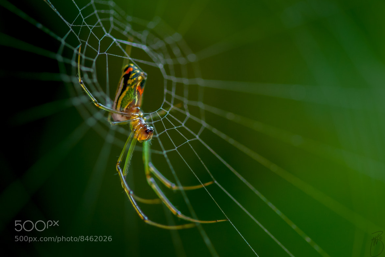 Photograph Spider by Boris W. Blanco Meza on 500px