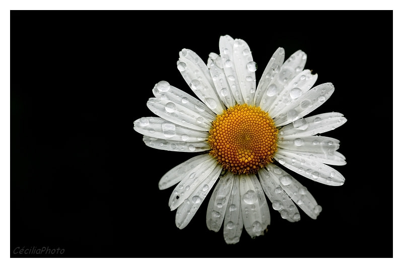 Photograph Water for Daisy  by Cécilia Photo on 500px