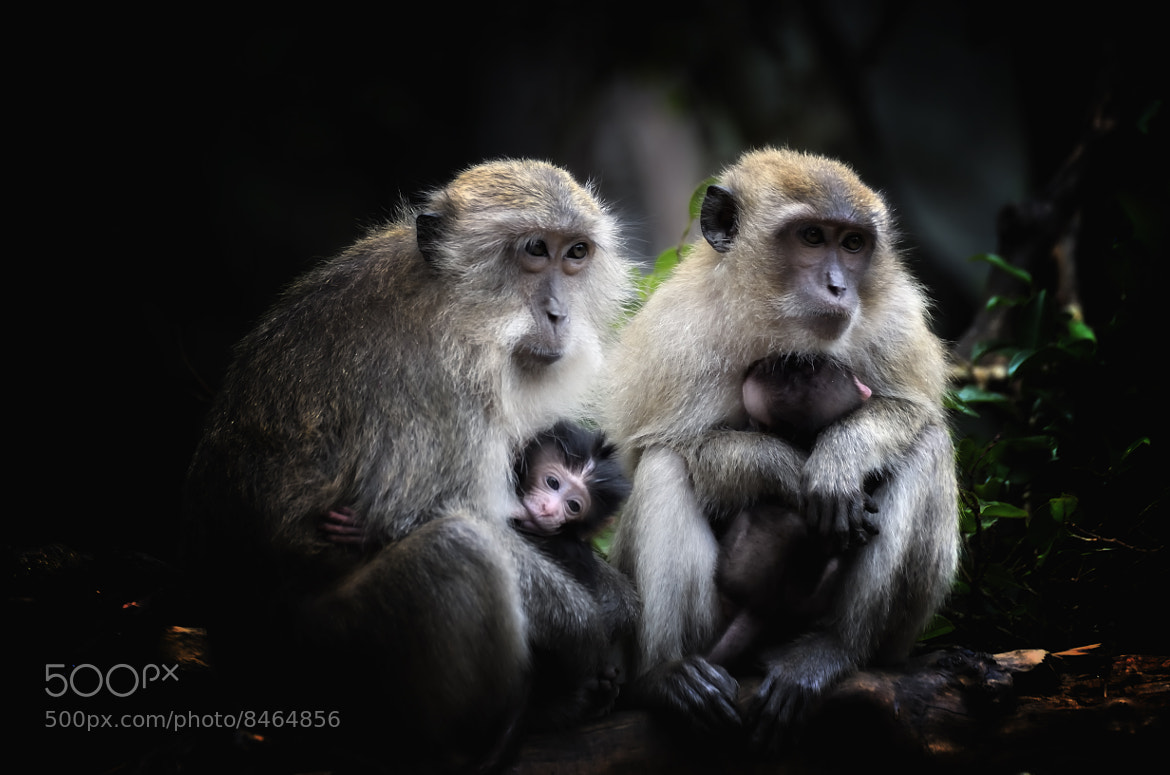 Photograph Family by Nuang Sangkhsri on 500px
