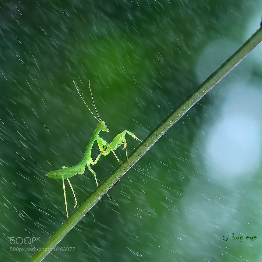 Photograph !...raining !....!!.!...day  by bug eye :) on 500px