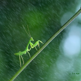 !...raining !....!!.!...day  by bug eye :) (bug_eye)) on 500px.com