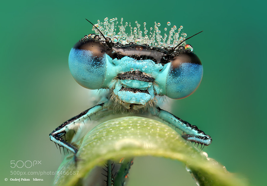 Blue by Ondrej Pakan on 500px.com