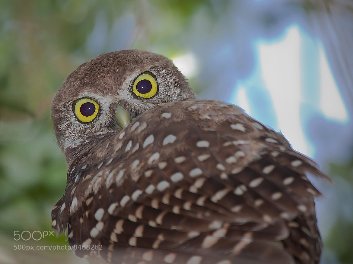 Photograph Eyes by Miguel Angel Leyva on 500px