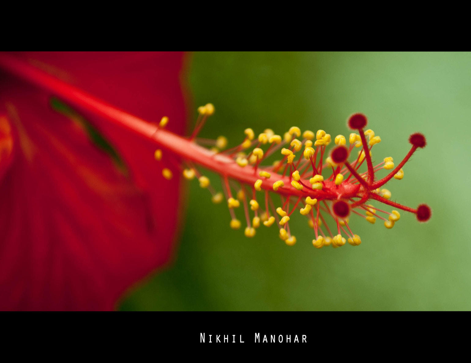 Photograph Ready for the bee by Nikhil Manohar on 500px